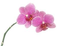 200_orchids
